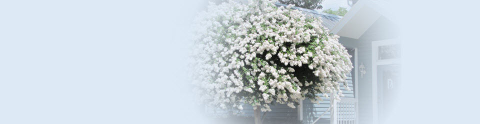 Blossoming tree in front of Benchmark Insurance Group